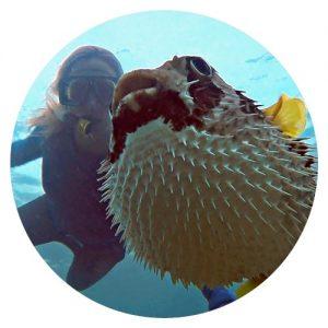 underwater photographer freediver