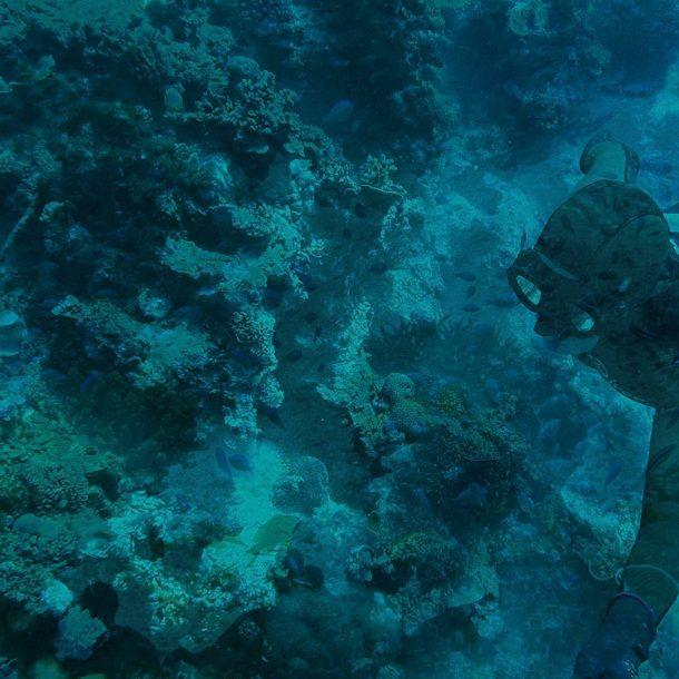 freediving videos