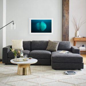 jellyfish framed photographic prints