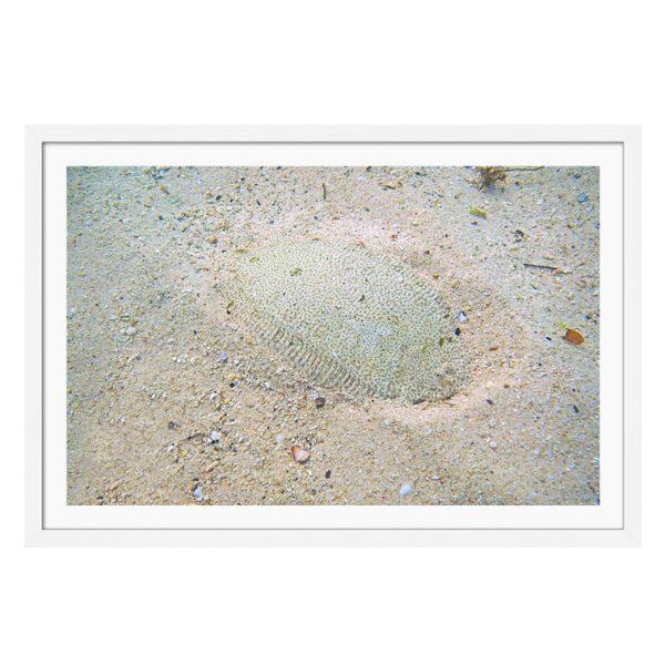 framed photographs for sale