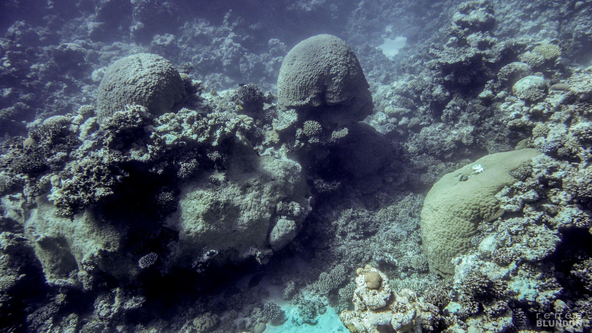 Ras Abu Galum Freediving Trip